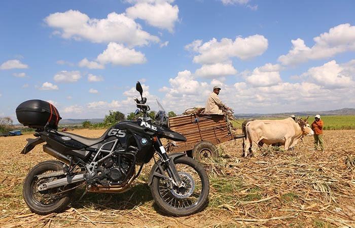 MOtoand CowWS